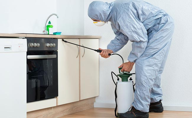 What are the Features of Pest Control Services
