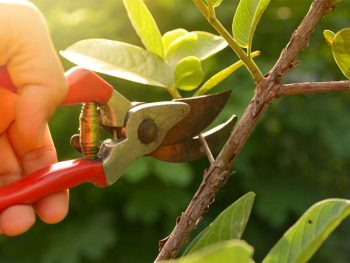 how to use pruning shears