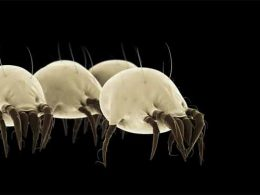 How to Kill Dust Mites
